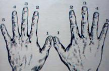 left and right hand fingers numbered for piano playing